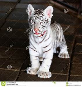 Baby Tiger Clipart Black And