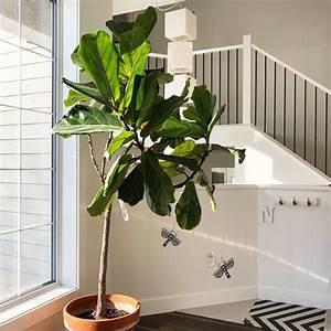 Tall, Indoor, Plants