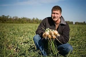 Wann Süßkartoffeln Ernten : zwiebeln ernten wann ist die zeit reif ~ Buech-reservation.com Haus und Dekorationen