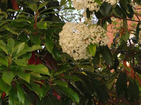 Foto En Flor (flores Blancas