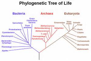 File:Phylogenetic tree svg - Wikipedia, the free encyclopedia