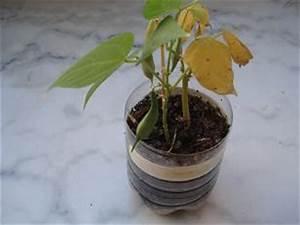 Faire Germer Des Graines De Poivrons : jardinage sur son balcon ~ Melissatoandfro.com Idées de Décoration
