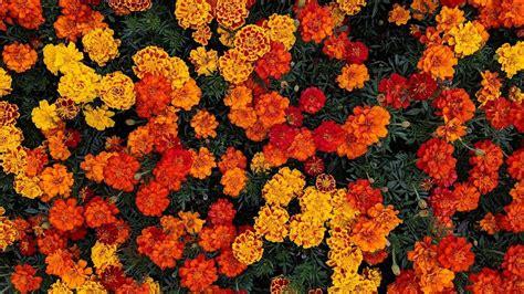 wallpaper orange aesthetic desktop 2021 wallpapers
