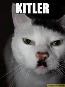 stupid cat heil kitler