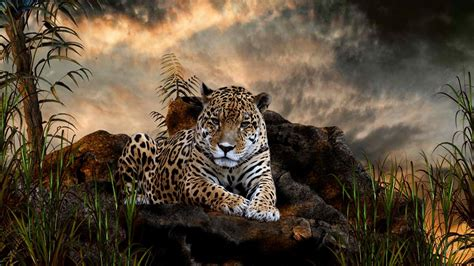 leopard wallpapers hd pixelstalknet