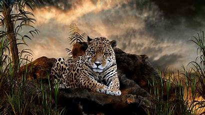 Leopard Wallpapers Background Desktop Pixelstalk