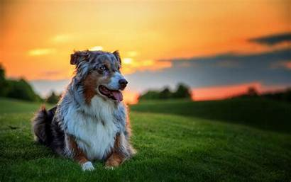 Dog Wallpapers Backgrounds Screensavers Dogs Puppy Background