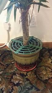 amazon, com, , , christmas, tree, defender, , u0026, potted, plant, protector, 48