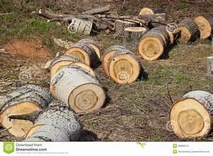 Achat Tronc Arbre Decoratif : beaucoup de sections de tronc d 39 arbre photographie stock ~ Zukunftsfamilie.com Idées de Décoration