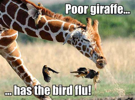 Meme Giraffe - meme images giraffe sneeze hd wallpaper and background photos 36890653
