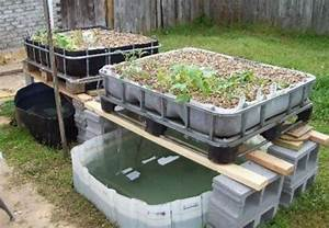 All In One Aquaponics System