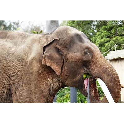 Asian ElephantAnimal Wildlife