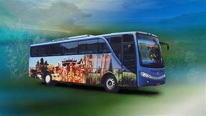 Bus Wallpapers Background Malam Pariwisata Patas Backgrounds