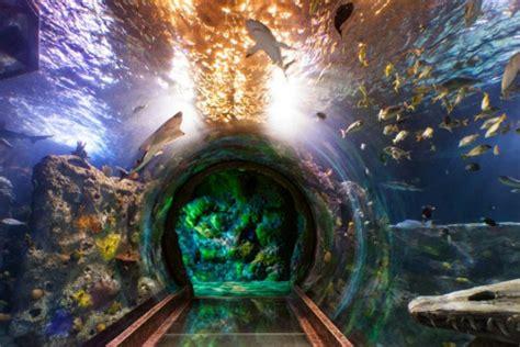 the sea aquarium at legoland california