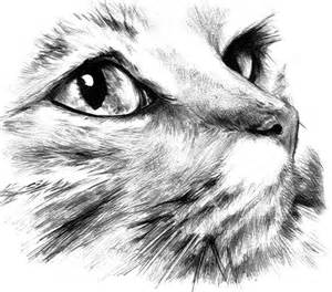 cat sketch 25 best ideas about cat drawing on cat