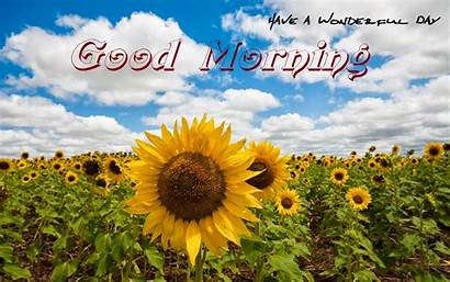 Morning Sunflowers Funny Nature Wallpapers Card Scraps