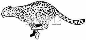 Leopard Running Pictures