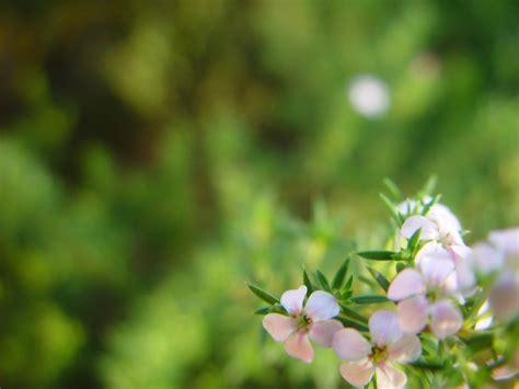 gratis bilde blomster bakgrunn