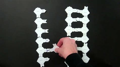 dna replication lab  paper models  youtube