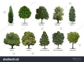 tree types sortsspecimensvector tree illustrations arborvitae stock vector 403766683