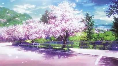 Cherry Blossom Anime Tree Wallpapers Sakura Blossoms