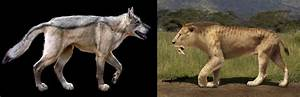 The Dire Wolf vs. the Saber-Toothed Tiger - Who Wins?