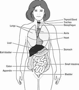 Human Body    Whole Human Body Diagram Coloring Pages