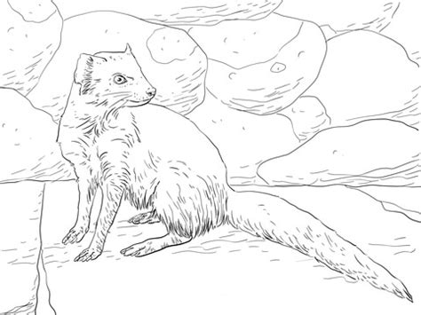 yellow mongoose coloring page supercoloringcom
