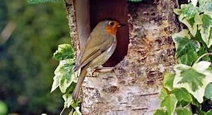 Plan Nichoir Oiseaux : des nichoirs pour les oiseaux dans son jardin ~ Melissatoandfro.com Idées de Décoration