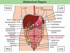 Of Anatomical De Picture Of Abdominal Quadrants Abr