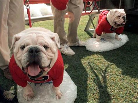 17 Best Images About Georgia Bulldogs On Pinterest