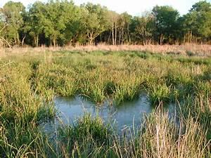 Review  Developers Failing To Follow Wetlands Mandate
