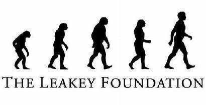 Leakey Foundation Darwin Charles Gombe Becas Doctorado