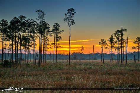 pine glade sunset  wetlands forest jupiter florida