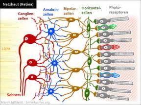 grün rot schwäche farbenblindheit achromatopsie ursache und wirkung