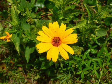 ocracoke island journal yellow flowers