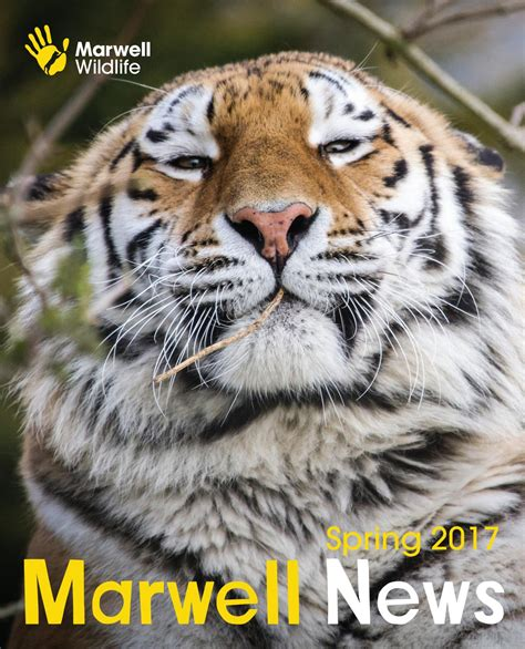 marwell zoo news spring   marwell wildlife issuu