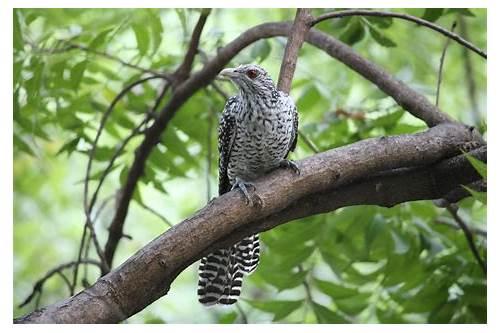 birds voice ringtone download free