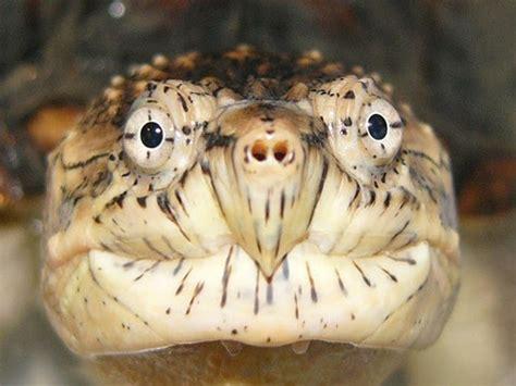 reptile amphibian medicine lafebervet