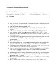 2009 Worksheet Thermodynamics Of Glycolysis  Worksheet #6 Thermodynamics