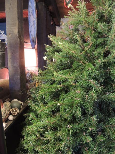 christmas tree 2012 001 small