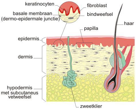 Ziekten van het bindweefsel