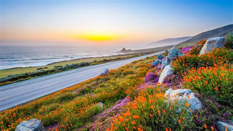 Milky Way Background Hd Wallpaper Beach Road Morning Sunrise Poppies Hd Nature 3827
