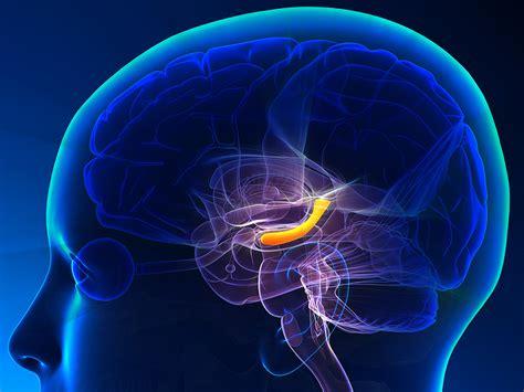 nsi   nootropic antidepressant  promotes neurogenesis