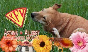 itchyscratchywheezydoes your super pet have allergies