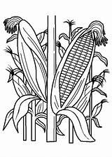 Coloring Hrana Kleurplaten Plantation Groente Vegetable Bojanke Corn Pilgrims Indians Vegetables Fruit Printable Voor Books Thanksgiving Coloriage Nazad Fruits Afkomstig sketch template