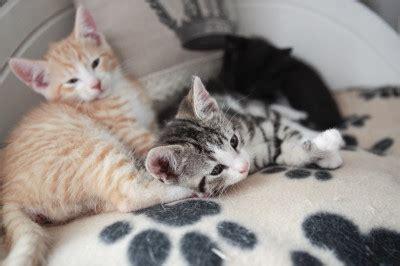 annetaan kissanpentuja ilmaiseksi