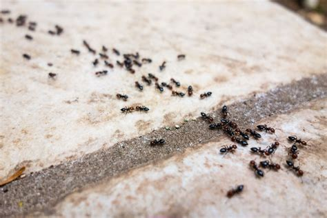 What Pests Should You Expect to See Inside Your Home This
