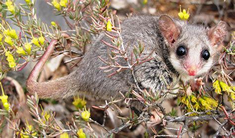 switching  hibernation  australia australian