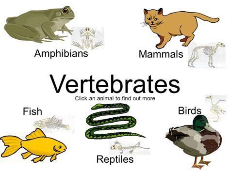 vertebrate clipart vertebrates mammals fish amphibians birds reptiles animals animal classification project classes clip ppt backbone cliparts slide1 plants presentation